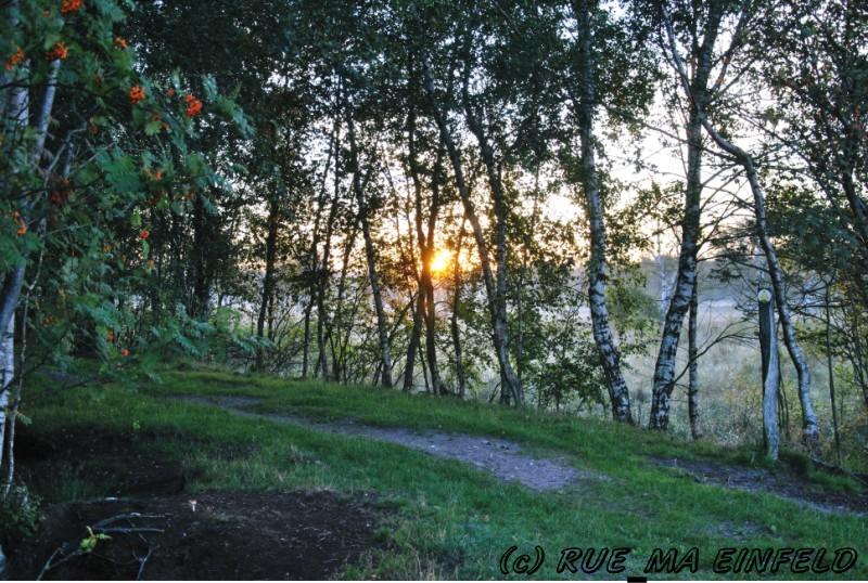 WDR 4 Spaziergang: Rund um Forsthaus Hohenroth - Freizeit